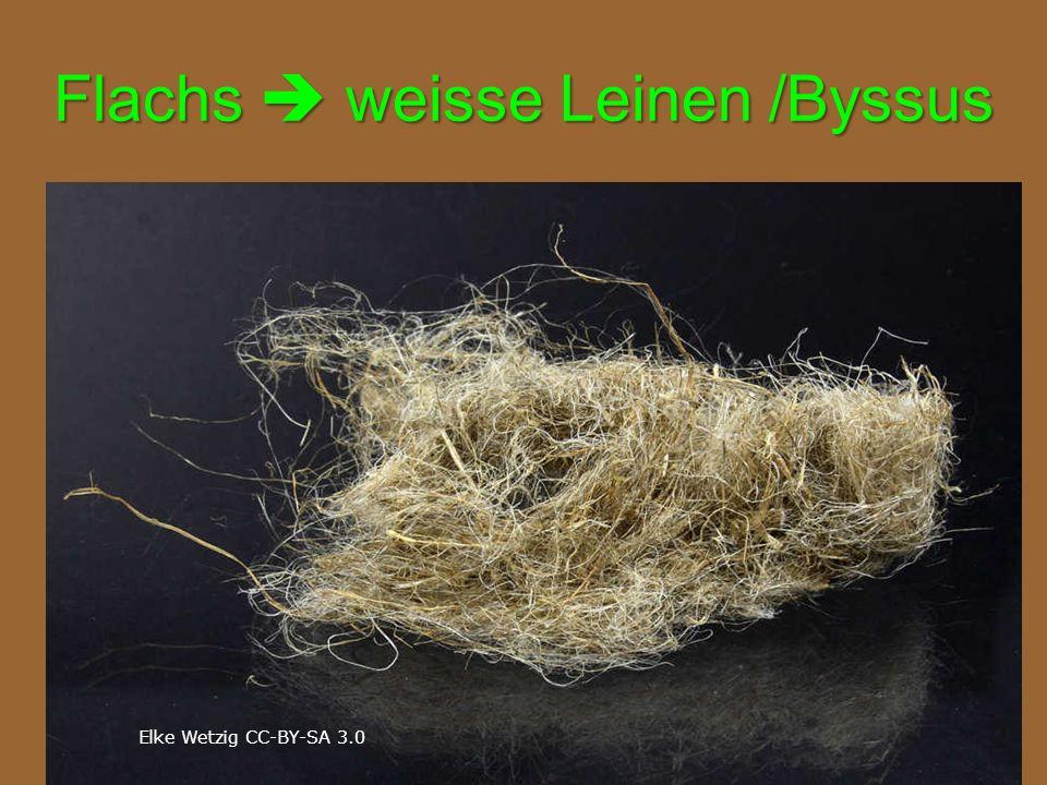 Flachs  weisse Leinen /Byssus Elke Wetzig CC-BY-SA 3.0
