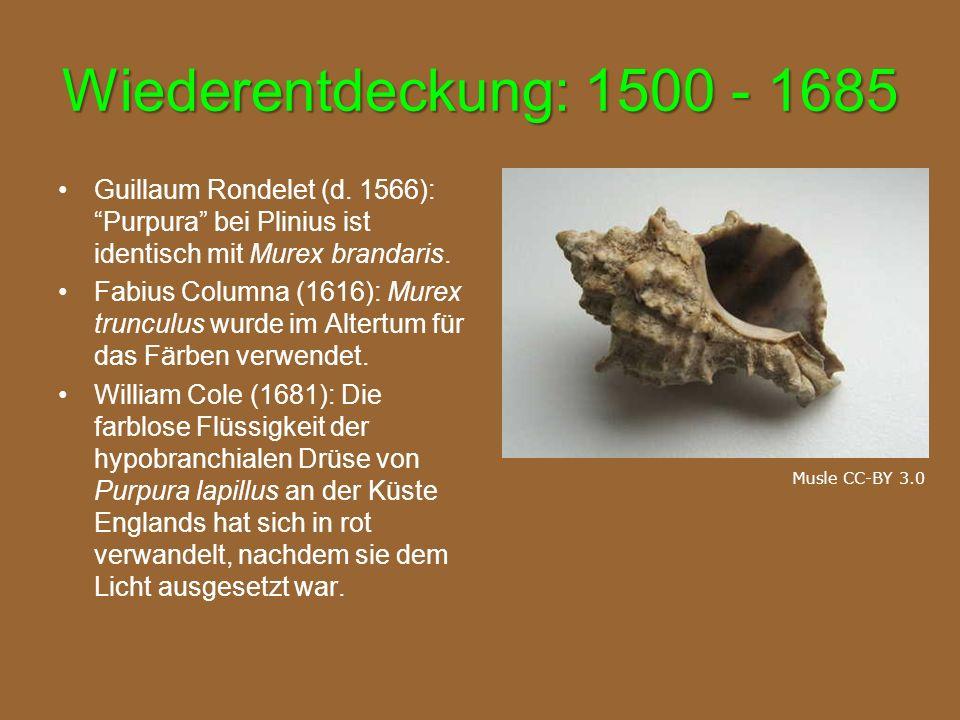"""Wiederentdeckung: 1500 - 1685 Guillaum Rondelet (d. 1566): """"Purpura"""" bei Plinius ist identisch mit Murex brandaris. Fabius Columna (1616): Murex trunc"""