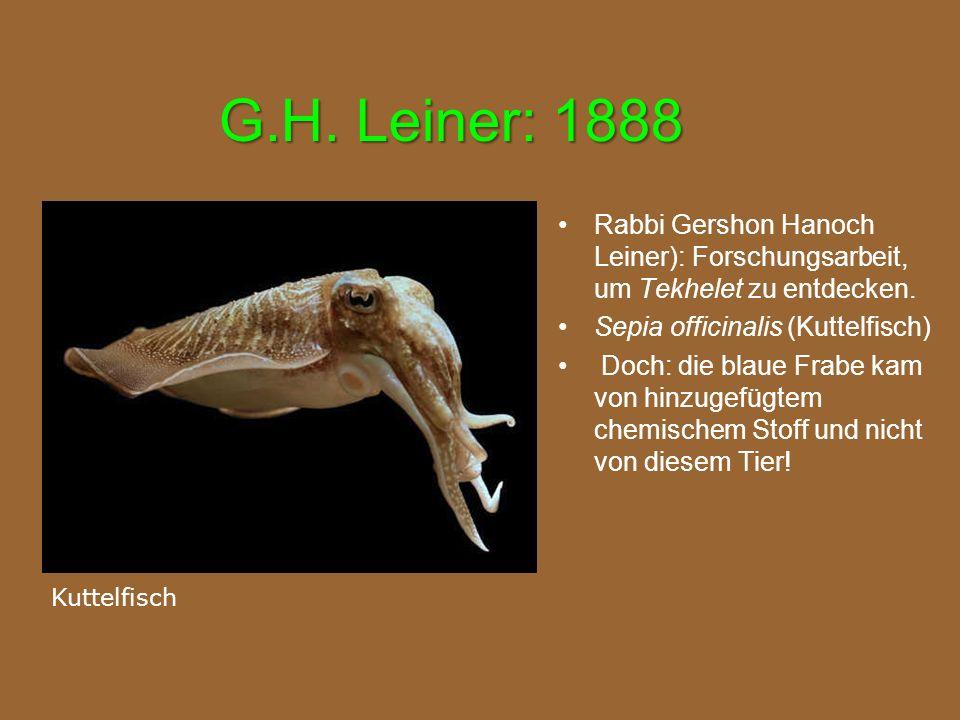 G.H. Leiner: 1888 Rabbi Gershon Hanoch Leiner): Forschungsarbeit, um Tekhelet zu entdecken. Sepia officinalis (Kuttelfisch) Doch: die blaue Frabe kam