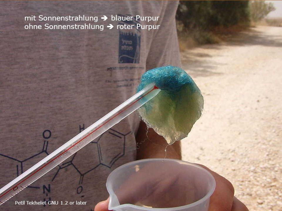 Petil Tekhelet GNU 1.2 or later mit Sonnenstrahlung  blauer Purpur ohne Sonnenstrahlung  roter Purpur