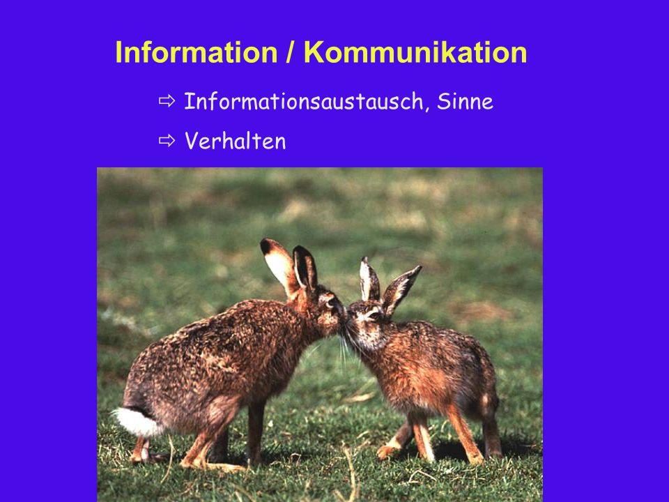 Information / Kommunikation  Informationsaustausch, Sinne  Verhalten