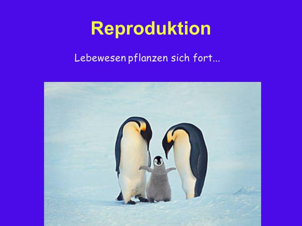 Reproduktion Lebewesen pflanzen sich fort...