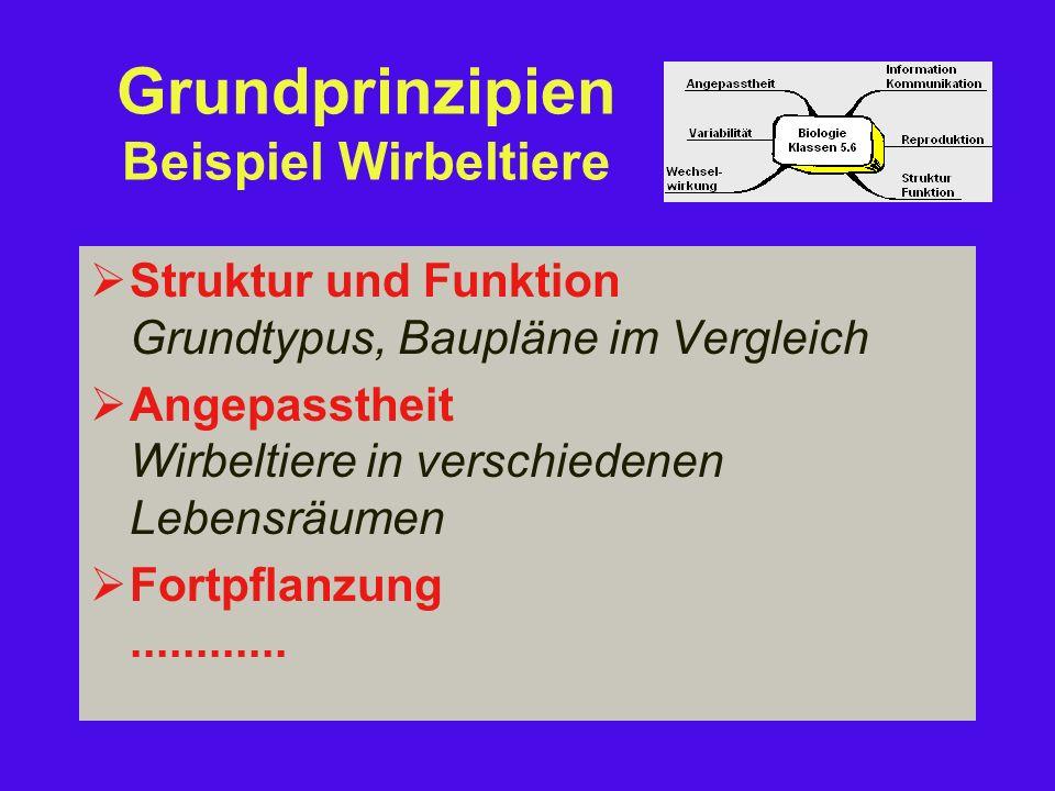 Grundprinzipien Beispiel Wirbeltiere  Struktur und Funktion Grundtypus, Baupläne im Vergleich  Angepasstheit Wirbeltiere in verschiedenen Lebensräumen  Fortpflanzung............