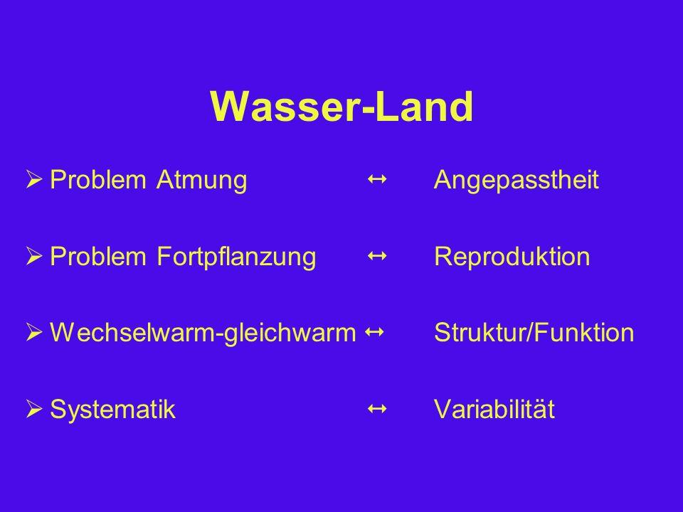 Wasser-Land  Problem Atmung  Angepasstheit  Problem Fortpflanzung  Reproduktion  Wechselwarm-gleichwarm  Struktur/Funktion  Systematik  Variabilität
