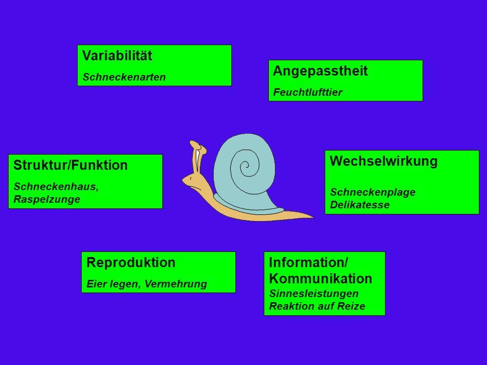 Variabilität Schneckenarten Angepasstheit Feuchtlufttier Wechselwirkung Schneckenplage Delikatesse Information/ Kommunikation Sinnesleistungen Reaktion auf Reize Reproduktion Eier legen, Vermehrung Struktur/Funktion Schneckenhaus, Raspelzunge