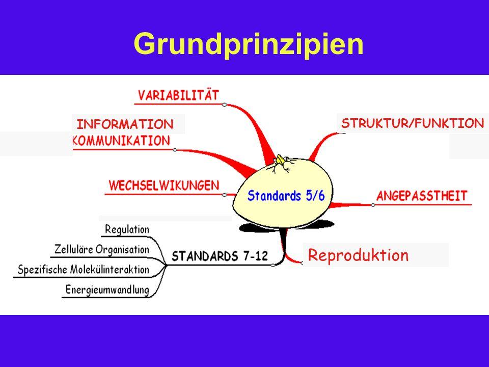Grundprinzipien  Grundgliederung nach den Prinzipien  Zuordnung von Kompetenzen  Systematik unter dem Aspekt Geschichte (Evolution)