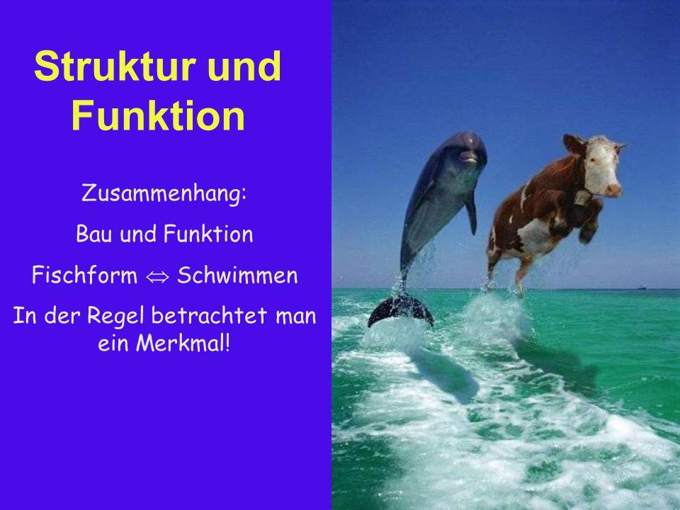Struktur und Funktion Zusammenhang: Bau und Funktion Fischform  Schwimmen In der Regel betrachtet man ein Merkmal!
