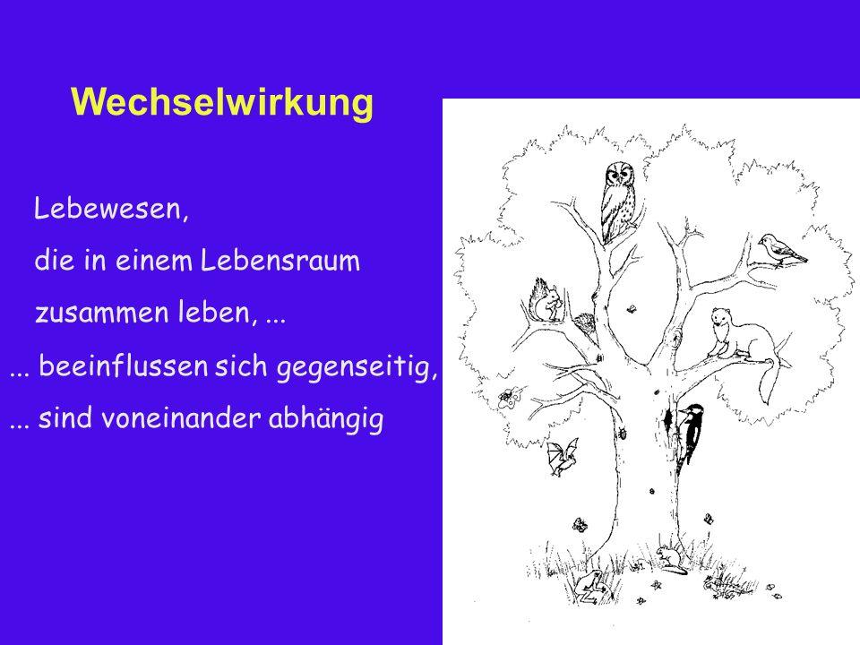 Wechselwirkung Lebewesen, die in einem Lebensraum zusammen leben,......