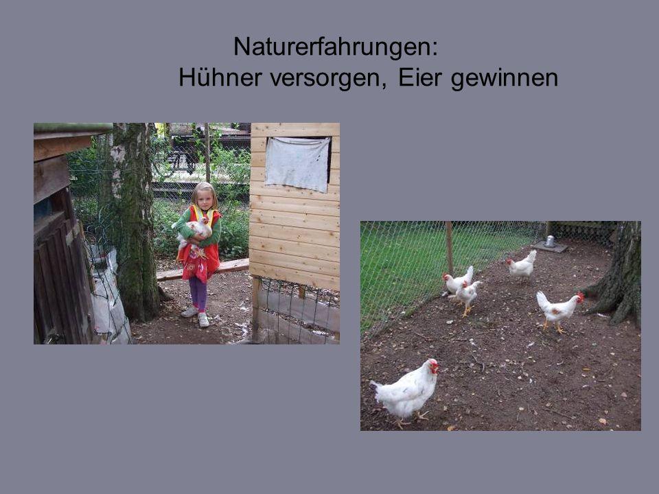 Naturerfahrungen: Hühner versorgen, Eier gewinnen