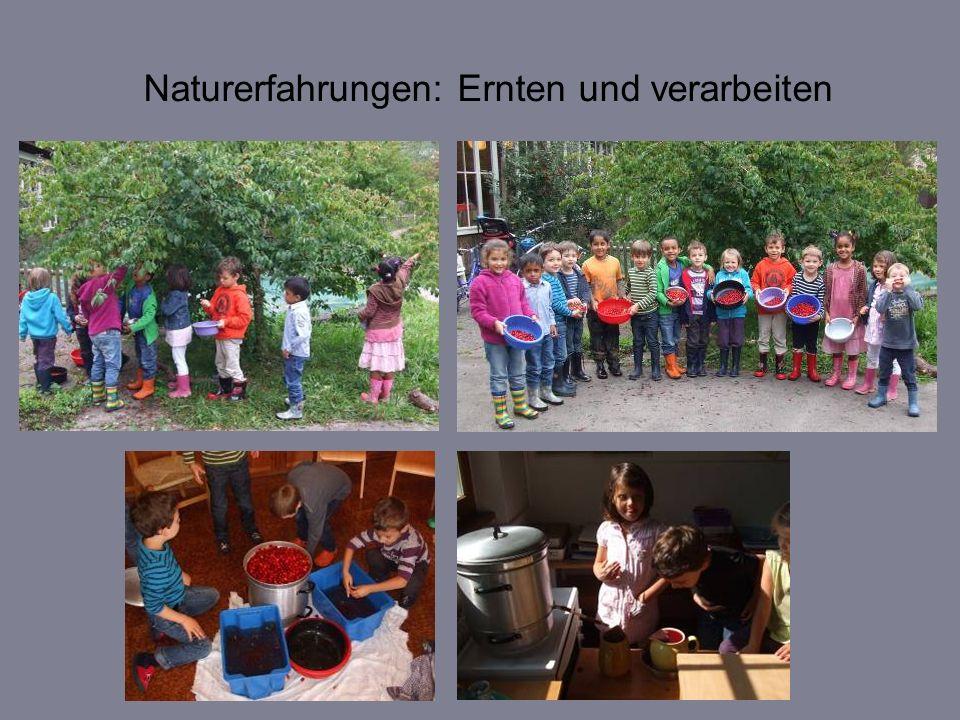 Naturerfahrungen: Ernten und verarbeiten
