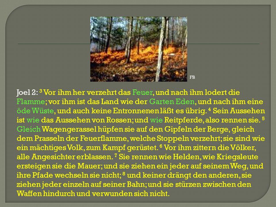 Joel 2: 3 Vor ihm her verzehrt das Feuer, und nach ihm lodert die Flamme; vor ihm ist das Land wie der Garten Eden, und nach ihm eine öde Wüste, und a