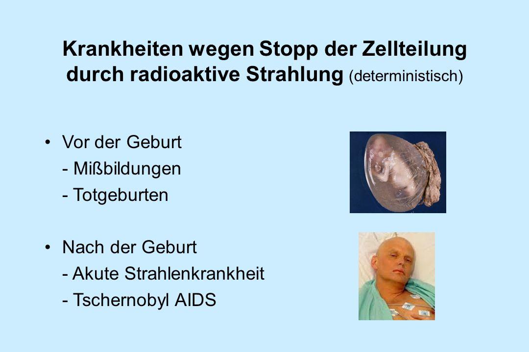 Krankheiten wegen Stopp der Zellteilung durch radioaktive Strahlung (deterministisch) Vor der Geburt - Mißbildungen - Totgeburten Nach der Geburt - Ak