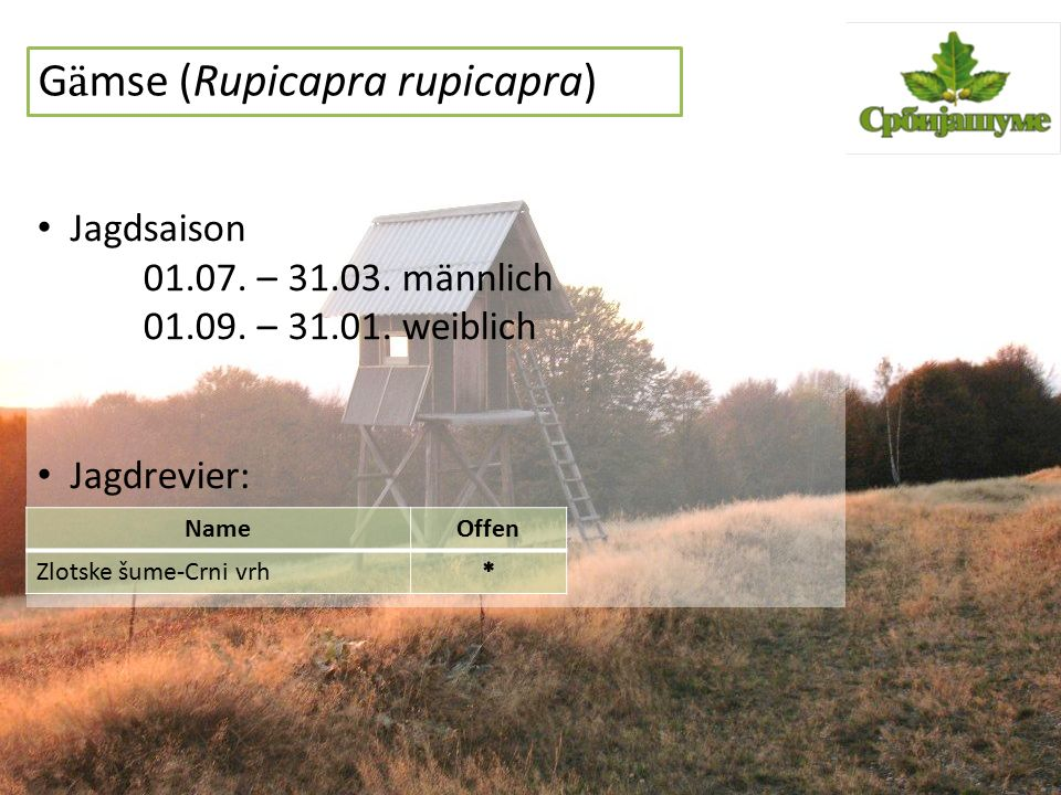 G ä mse (Rupicapra rupicapra) Jagdsaison 01.07. – 31.03. männlich 01.09. – 31.01. weiblich Jagdrevier: NameOffen Zlotske šume-Crni vrh