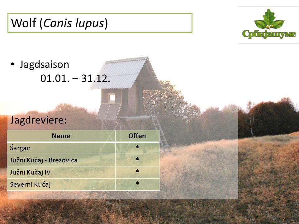 Wolf (Canis lupus) Jagdsaison 01.01. – 31.12. Jagdreviere: NameOffen Šargan Južni Kučaj - Brezovica Južni Kučaj IV Severni Kučaj
