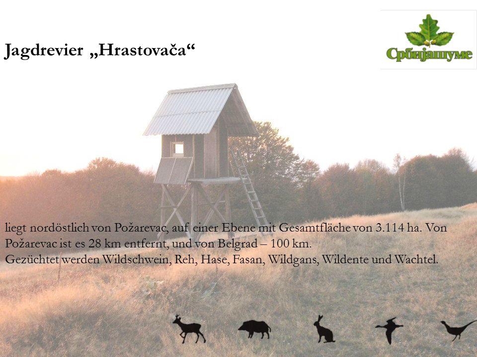 """Jagdrevier """"Hrastovača"""" liegt nordöstlich von Požarevac, auf einer Ebene mit Gesamtfläche von 3.114 ha. Von Požarevac ist es 28 km entfernt, und von B"""