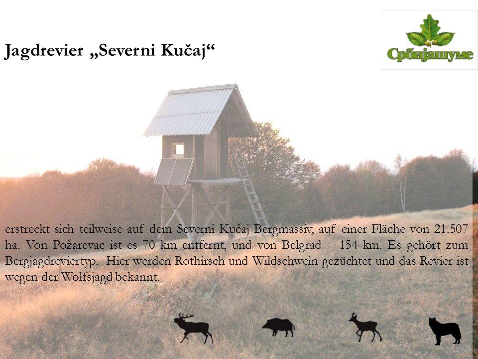 """Jagdrevier """"Severni Kučaj"""" erstreckt sich teilweise auf dem Severni Kučaj Bergmassiv, auf einer Fläche von 21.507 ha. Von Požarevac ist es 70 km entfe"""