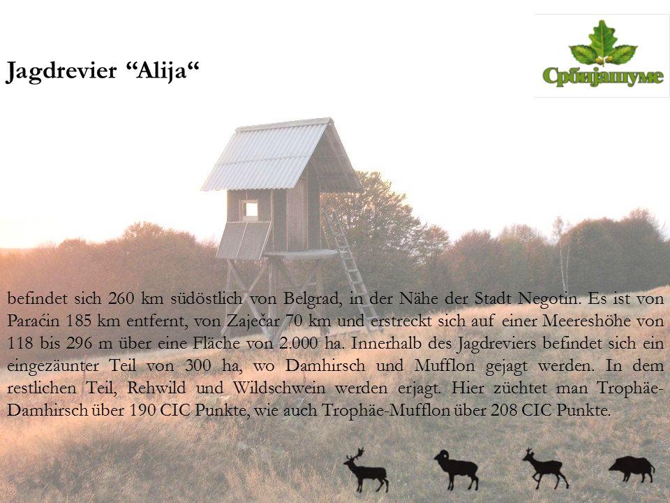 """Jagdrevier """"Alija"""" befindet sich 260 km südöstlich von Belgrad, in der Nähe der Stadt Negotin. Es ist von Paraćin 185 km entfernt, von Zaječar 70 km u"""