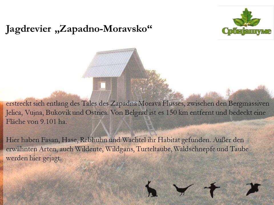 "Jagdrevier ""Zapadno-Moravsko"" erstreckt sich entlang des Tales des Zapadna Morava Flusses, zwischen den Bergmassiven Jelica, Vujna, Bukovik und Ostric"