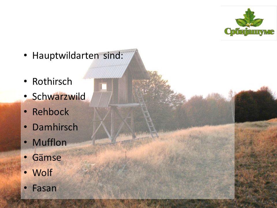 Hauptwildarten sind: Rothirsch Schwarzwild Rehbock Damhirsch Mufflon G ä mse Wolf Fasan