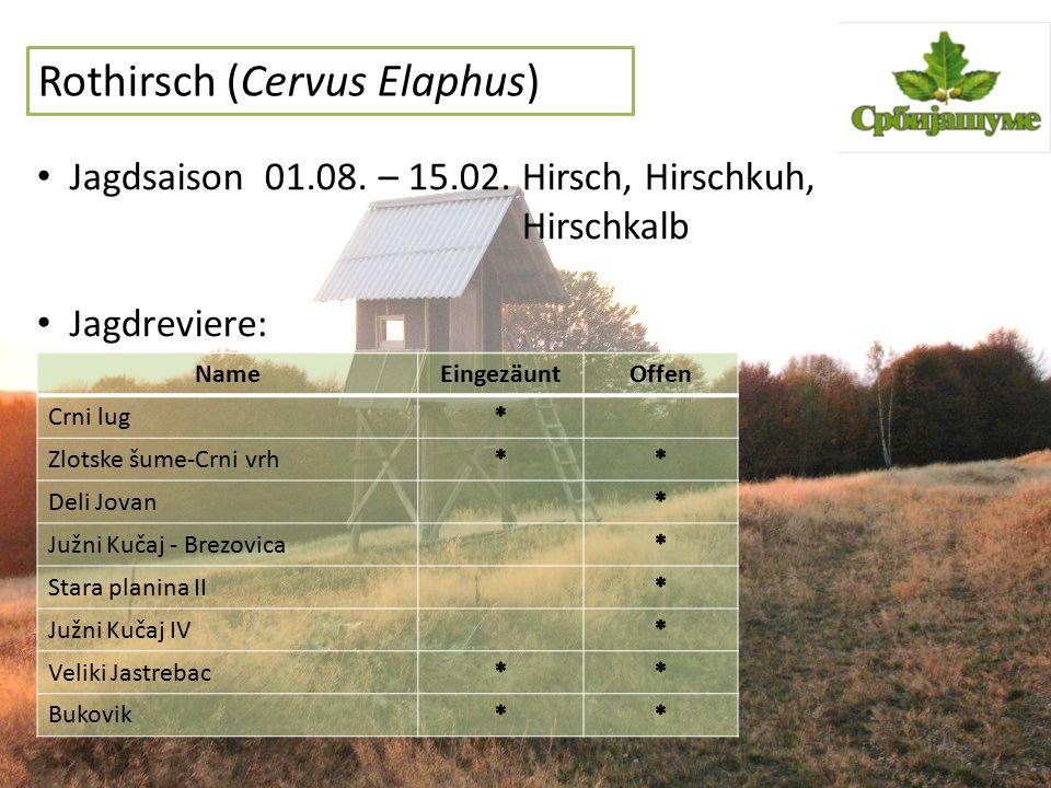 Rothirsch (Cervus Elaphus) Jagdsaison 01.08. – 15.02. Hirsch, Hirschkuh, Hirschkalb Jagdreviere: NameEingezäuntOffen Crni lug Zlotske šume-Crni vrh De