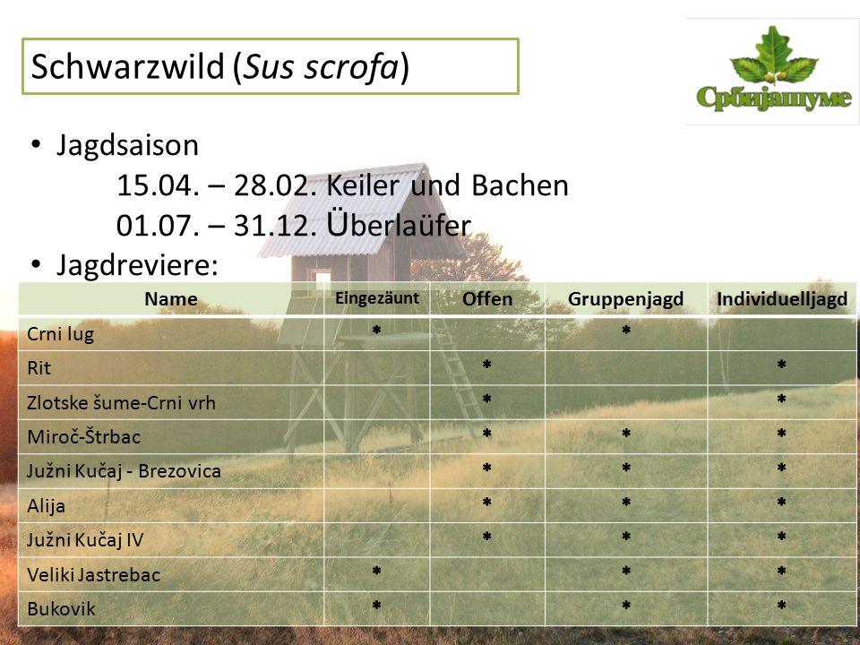 Schwarzwild (Sus scrofa) Jagdsaison 15.04. – 28.02. Keiler und Bachen 01.07. – 31.12. Ü berlaüfer Jagdreviere: Name Eingezäunt OffenGruppenjagdIndivid