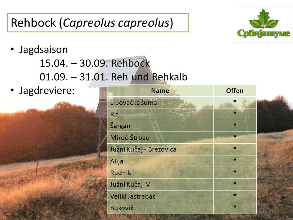 Rehbock (Capreolus capreolus) Jagdsaison 15.04. – 30.09. Rehbock 01.09. – 31.01. Reh und Rehkalb Jagdreviere: NameOffen Lipovačka šuma Rit Šargan Miro