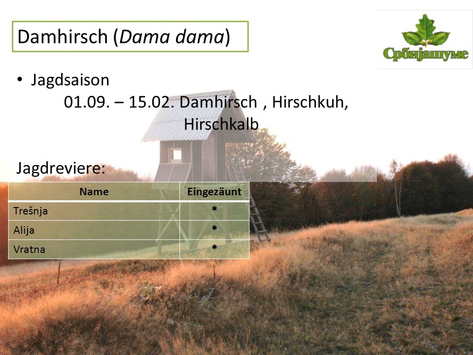Damhirsch (Dama dama) Jagdsaison 01.09. – 15.02. Damhirsch, Hirschkuh, Hirschkalb Jagdreviere: NameEingezäunt Trešnja Alija Vratna