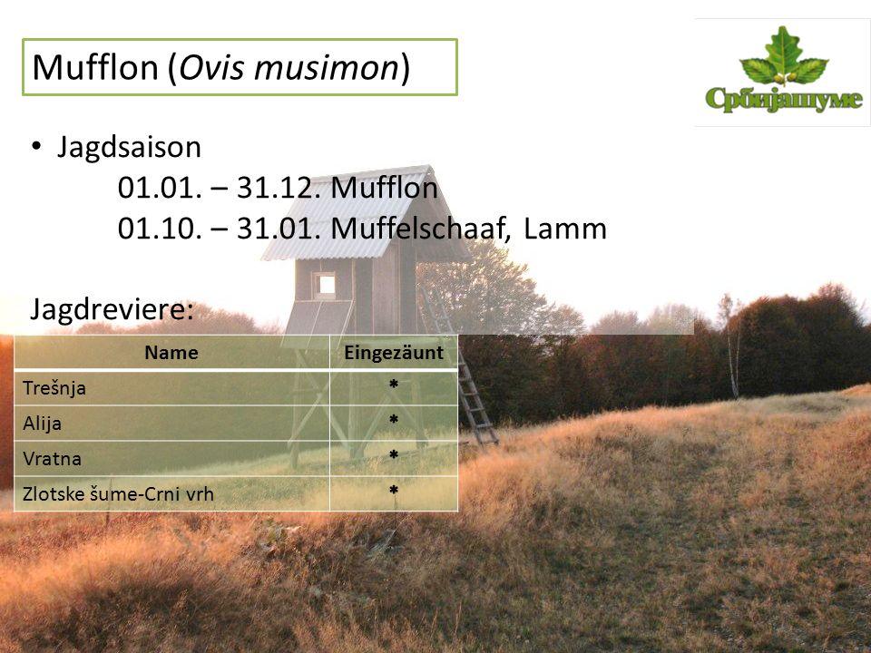 G ä mse (Rupicapra rupicapra) Jagdsaison 01.07.– 31.03.