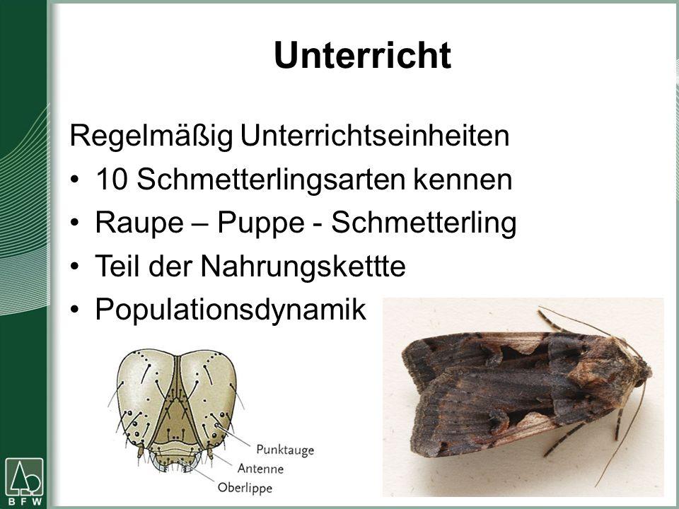 Unterricht Regelmäßig Unterrichtseinheiten 10 Schmetterlingsarten kennen Raupe – Puppe - Schmetterling Teil der Nahrungskettte Populationsdynamik