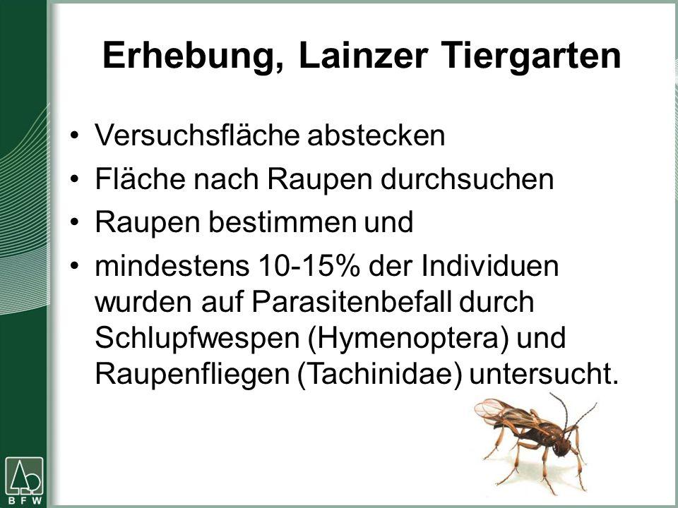 Erhebung, Lainzer Tiergarten Versuchsfläche abstecken Fläche nach Raupen durchsuchen Raupen bestimmen und mindestens 10-15% der Individuen wurden auf Parasitenbefall durch Schlupfwespen (Hymenoptera) und Raupenfliegen (Tachinidae) untersucht.
