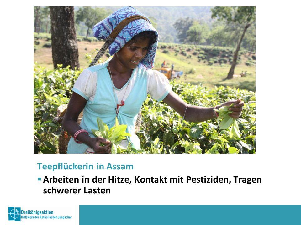 Teepflückerin in Assam  Arbeiten in der Hitze, Kontakt mit Pestiziden, Tragen schwerer Lasten