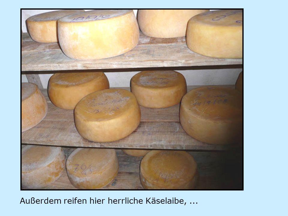 Außerdem reifen hier herrliche Käselaibe,...