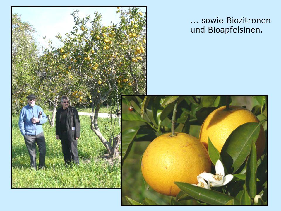 ... sowie Biozitronen und Bioapfelsinen.