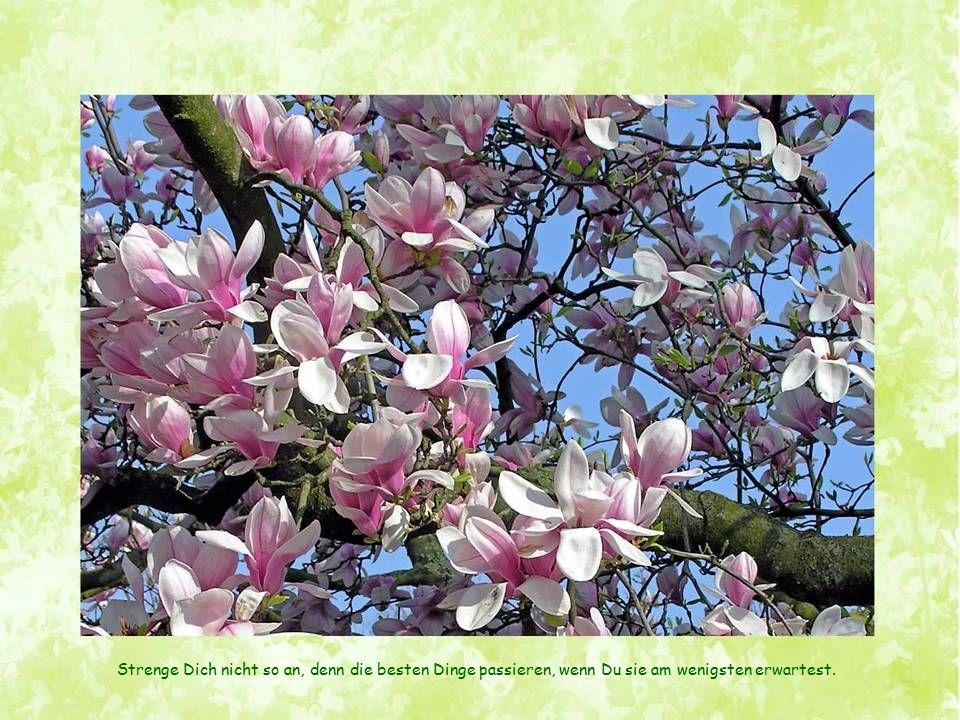 F R Ü H L I N G Wie Samen, die unter der Schneedecke träumen, träumen unsere Herzen vom Frühling.