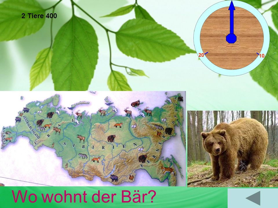 2 Tiere 400 Wo wohnt der Bär Er wohnt in Sibirien, im Fernen Osten, in Zentralrussland,