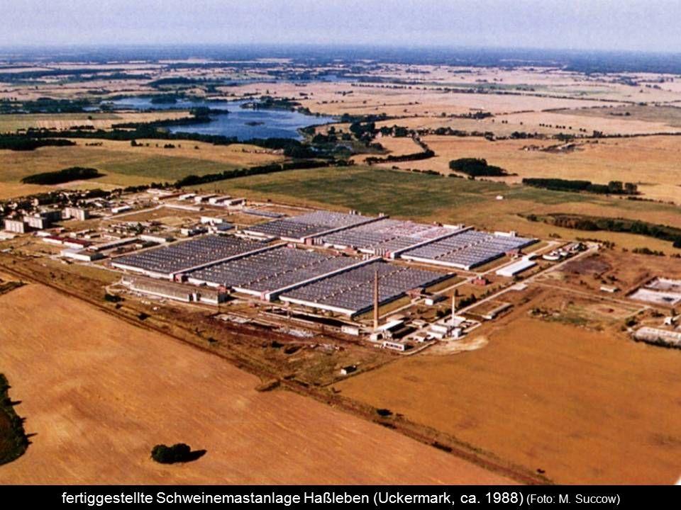 fertiggestellte Schweinemastanlage Haßleben (Uckermark, ca. 1988) (Foto: M. Succow)