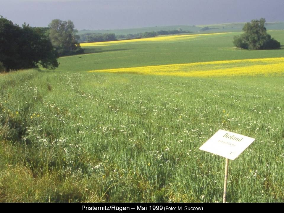 Pristernitz/Rügen – Mai 1999 (Foto: M. Succow)