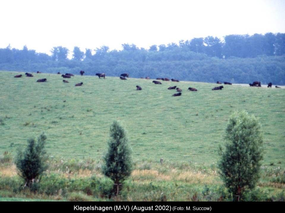 Klepelshagen (M-V) (August 2002) (Foto: M. Succow)