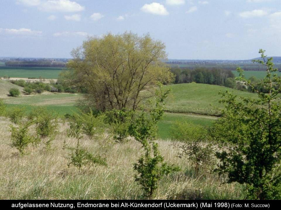 aufgelassene Nutzung, Endmoräne bei Alt-Künkendorf (Uckermark) (Mai 1998) (Foto: M. Succow)