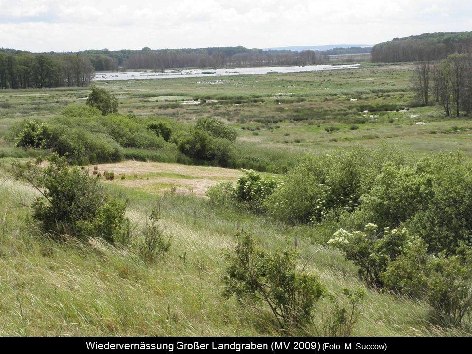 Wiedervernässung Großer Landgraben (MV 2009) (Foto: M. Succow)