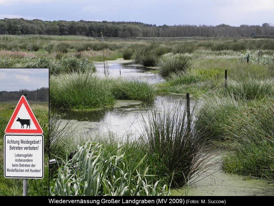 Wiedervernässung Großer Landgraben (MV 2009) (Fotos: M. Succow)