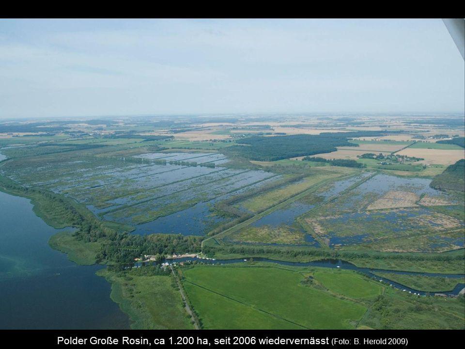 Polder Große Rosin, ca 1.200 ha, seit 2006 wiedervernässt (Foto: B. Herold 2009)
