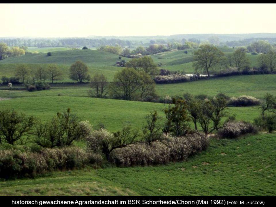 historisch gewachsene Agrarlandschaft im BSR Schorfheide/Chorin (Mai 1992) (Foto: M. Succow)