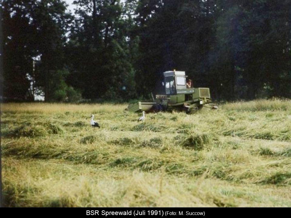 BSR Spreewald (Juli 1991) (Foto: M. Succow)