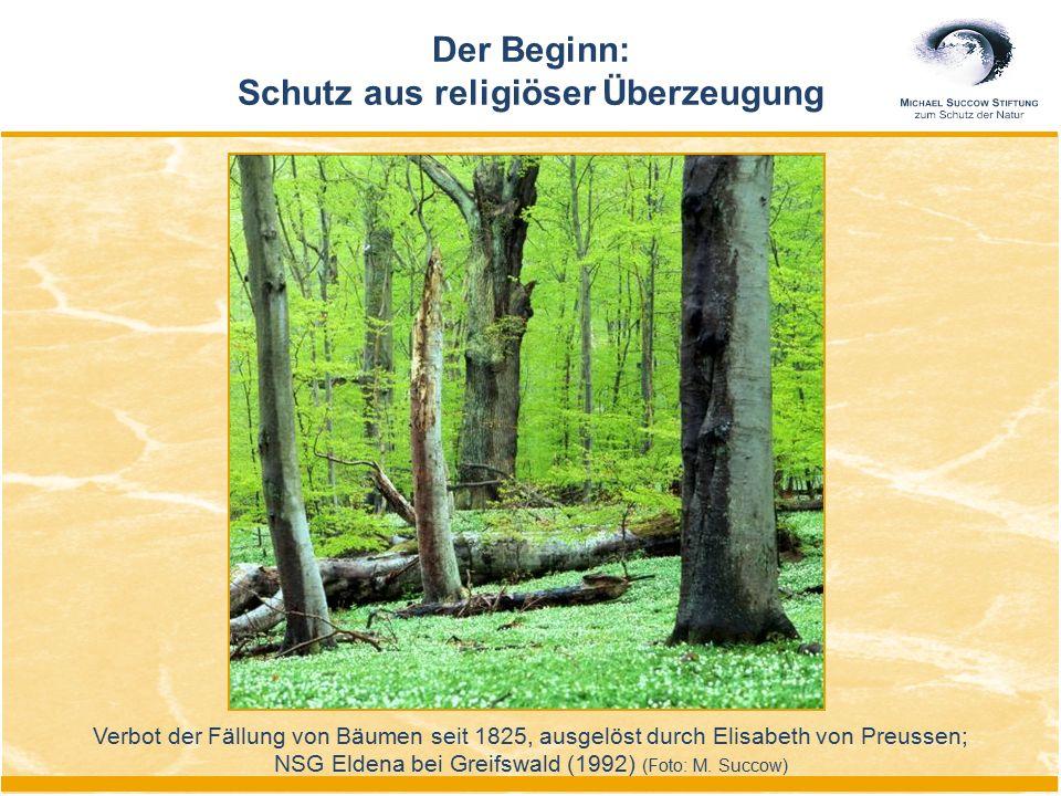 Der Beginn: Schutz aus religiöser Überzeugung Verbot der Fällung von Bäumen seit 1825, ausgelöst durch Elisabeth von Preussen; NSG Eldena bei Greifswa