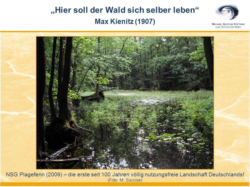 """NSG Plagefenn (2009) – die erste seit 100 Jahren völlig nutzungsfreie Landschaft Deutschlands! (Foto: M. Succow) """"Hier soll der Wald sich selber leben"""