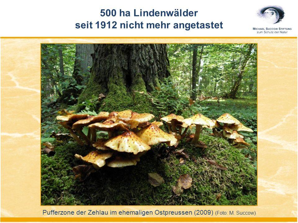 Pufferzone der Zehlau im ehemaligen Ostpreussen (2009) (Foto: M. Succow) 500 ha Lindenwälder seit 1912 nicht mehr angetastet