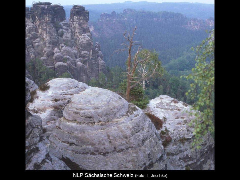 NLP Sächsische Schweiz (Foto: L. Jeschke)