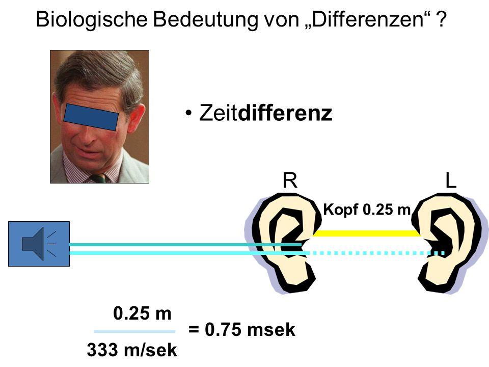 """Biologische Bedeutung von """"Differenzen ? Zeitdifferenz Kopf 0.25 m RL = 0.75 msek 333 m/sek 0.25 m"""