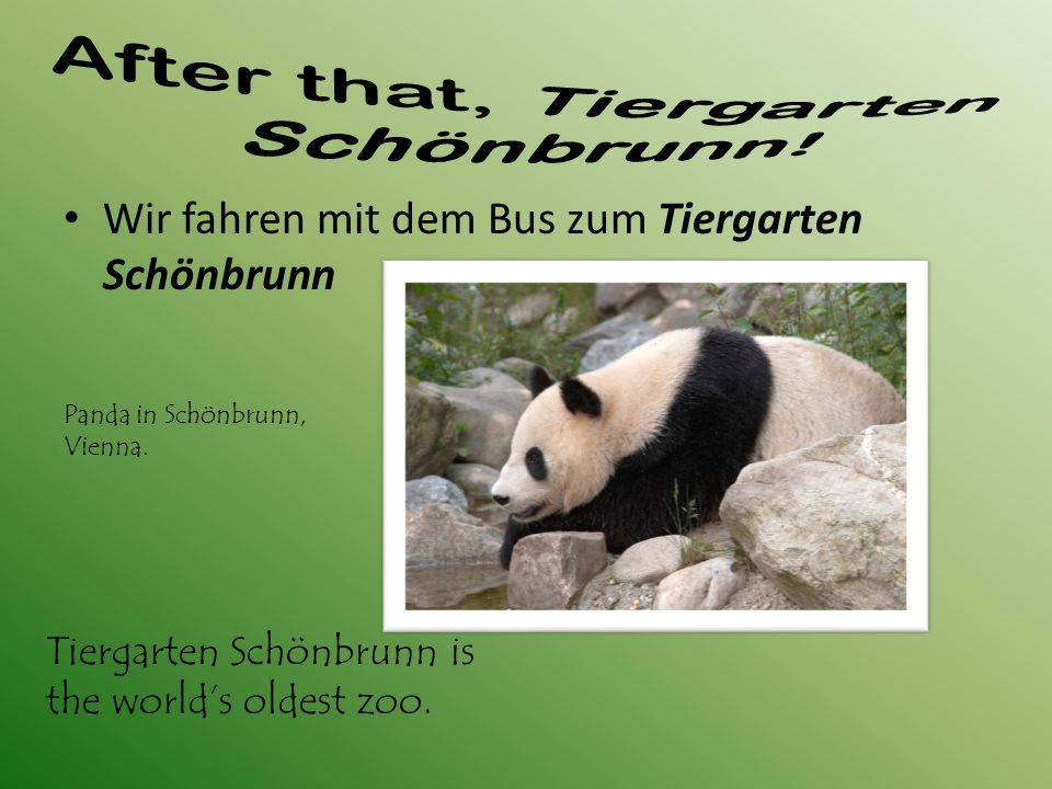 Wir fahren mit dem Bus zum Tiergarten Schönbrunn Tiergarten Schönbrunn is the world's oldest zoo.